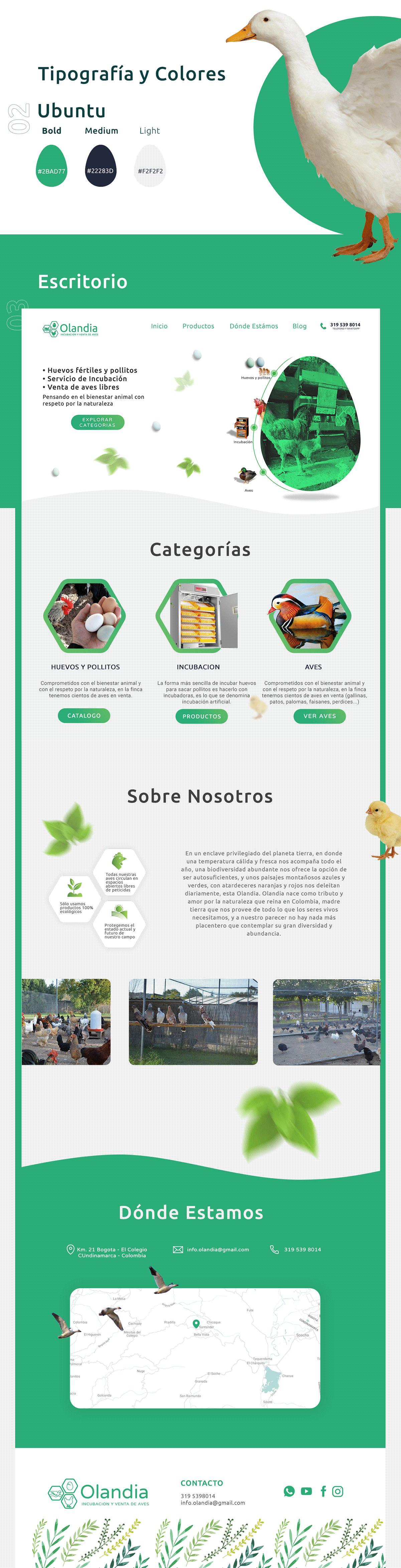 diseño de pagina web olandia